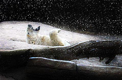 polar-snow_edited-1.jpg