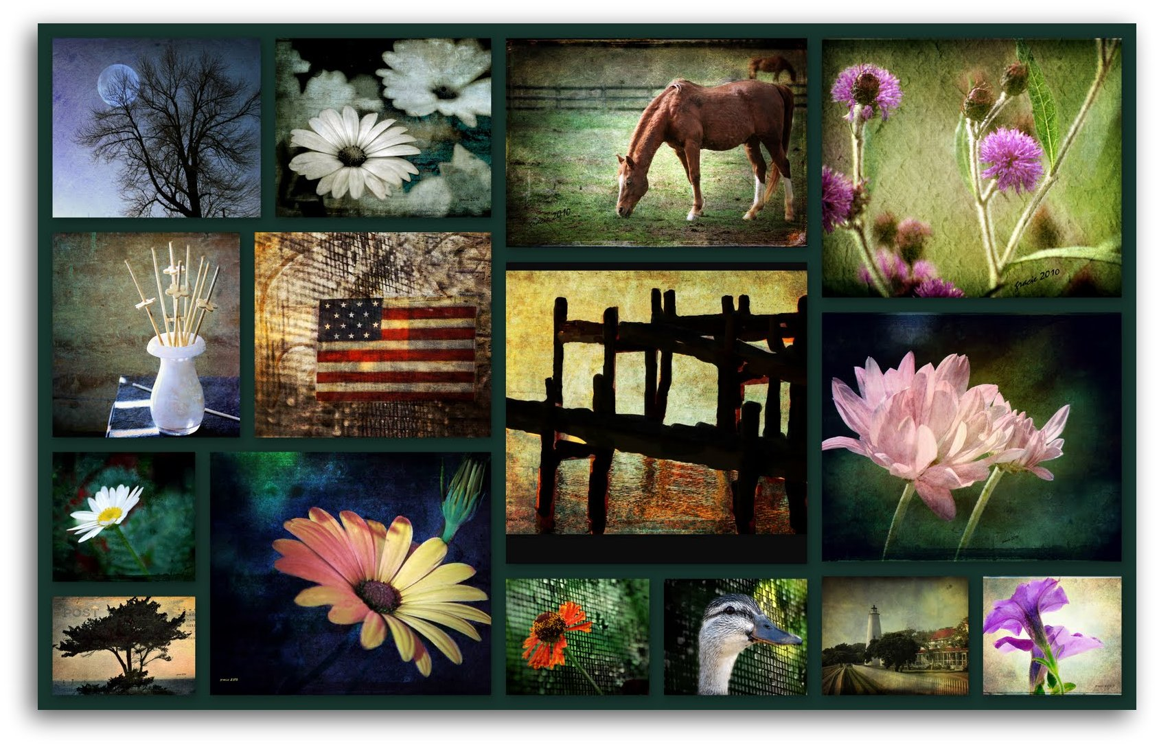 Collages from picasa down to earth photography stuff all jeuxipadfo Images